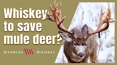 Drink Whiskey to Save Mule Deer! Wyoming Whiskey Review