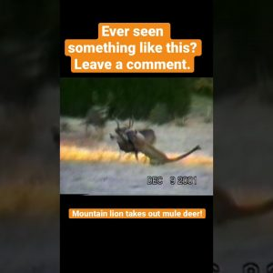 Lion takes down deer! Have you ever seen this?